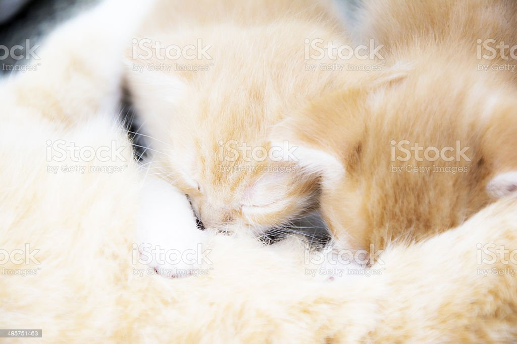 Two kittens having a nap stock photo