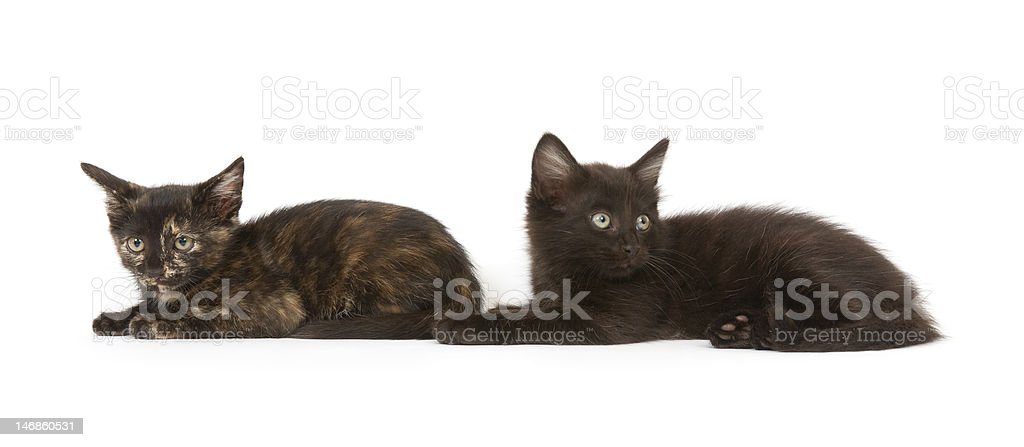 Two kittens on white stock photo