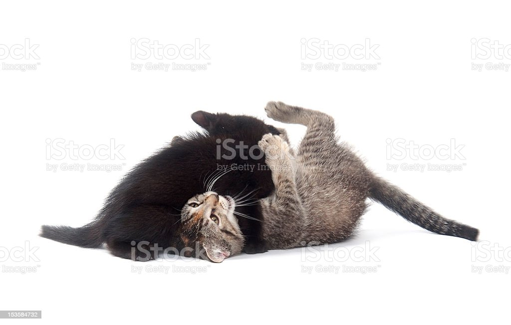 Two kittens playing and fighting stock photo
