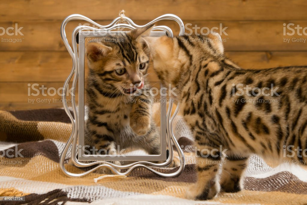 two kittens playing with the photo frame, looking at each other stock photo