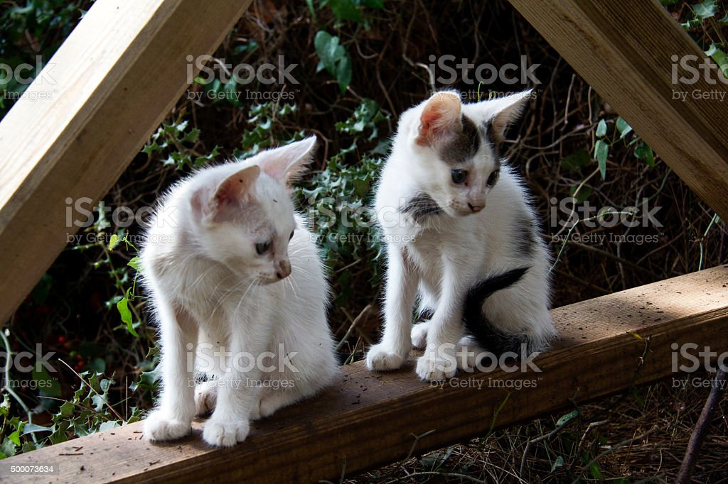 two kittens sitting on fence stock photo