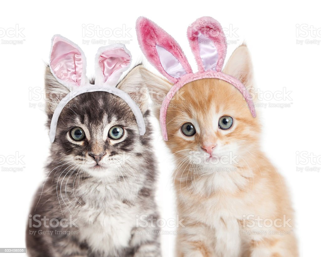 Two kittens wearing Easter bunny ears stock photo