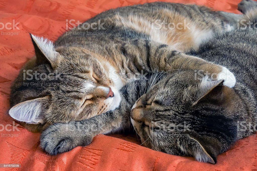 Two kitty sleeping foto de stock royalty-free