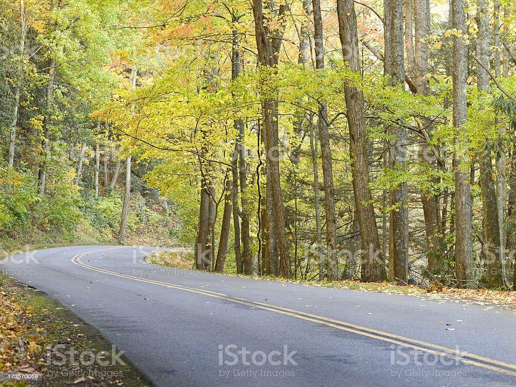 Two lane autumn (XXL) royalty-free stock photo