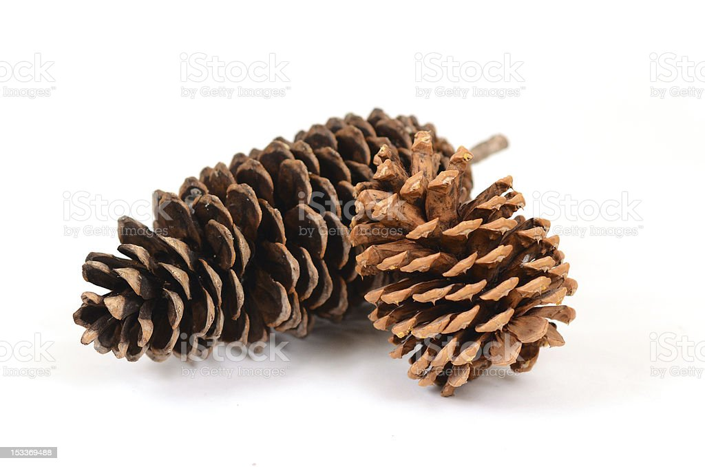 Two Large Pine Cones royalty-free stock photo