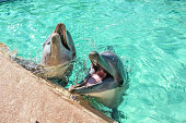 Two laughing dolphin