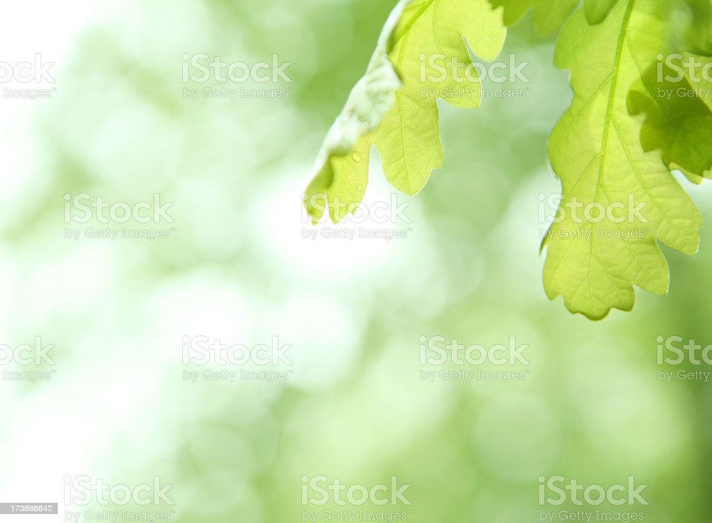 two leaves royalty-free stock photo