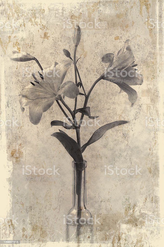 Two lilies in grunge style royalty-free stock photo