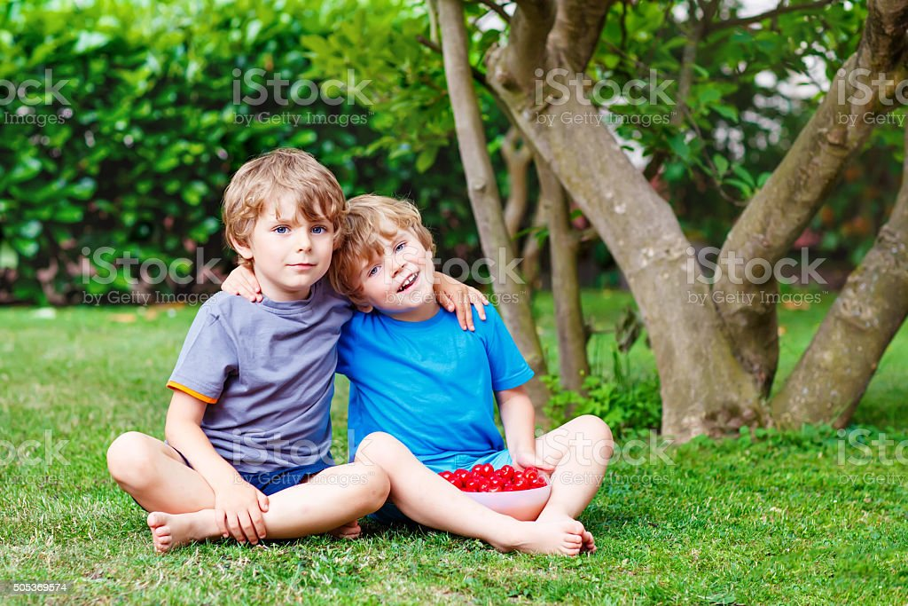 Two little boys picking cherries in garden, outdoors. stock photo