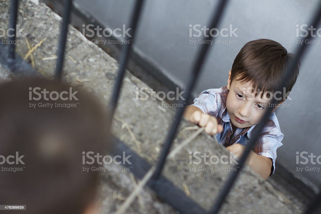 Two little boys tug of war royalty-free stock photo