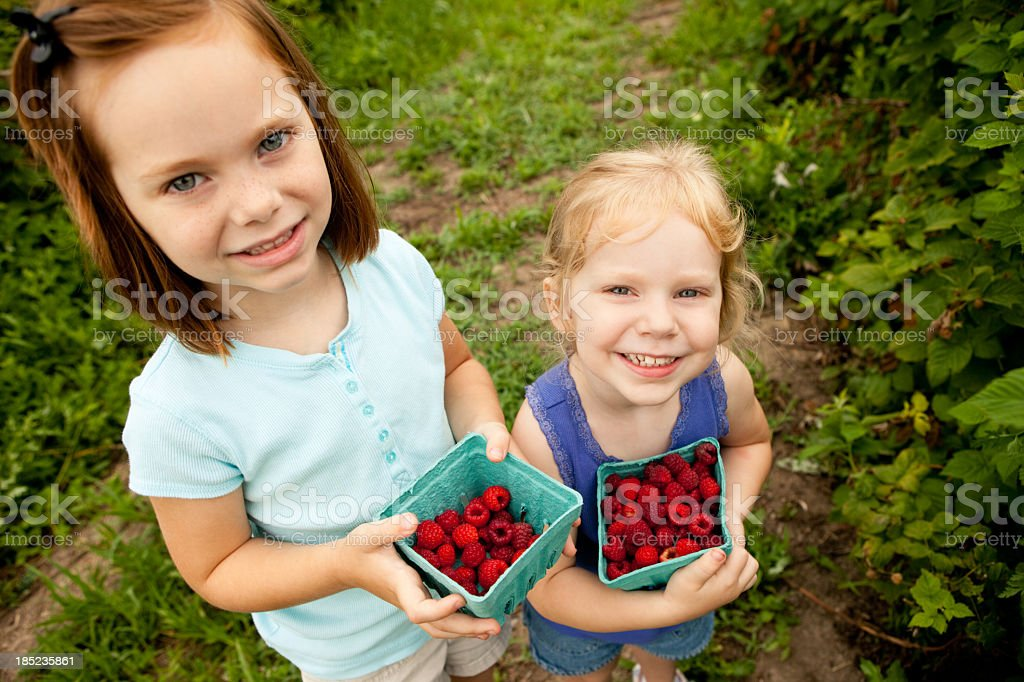 Two Little Girls Holding Cartons of Raspberries They Picked royalty-free stock photo