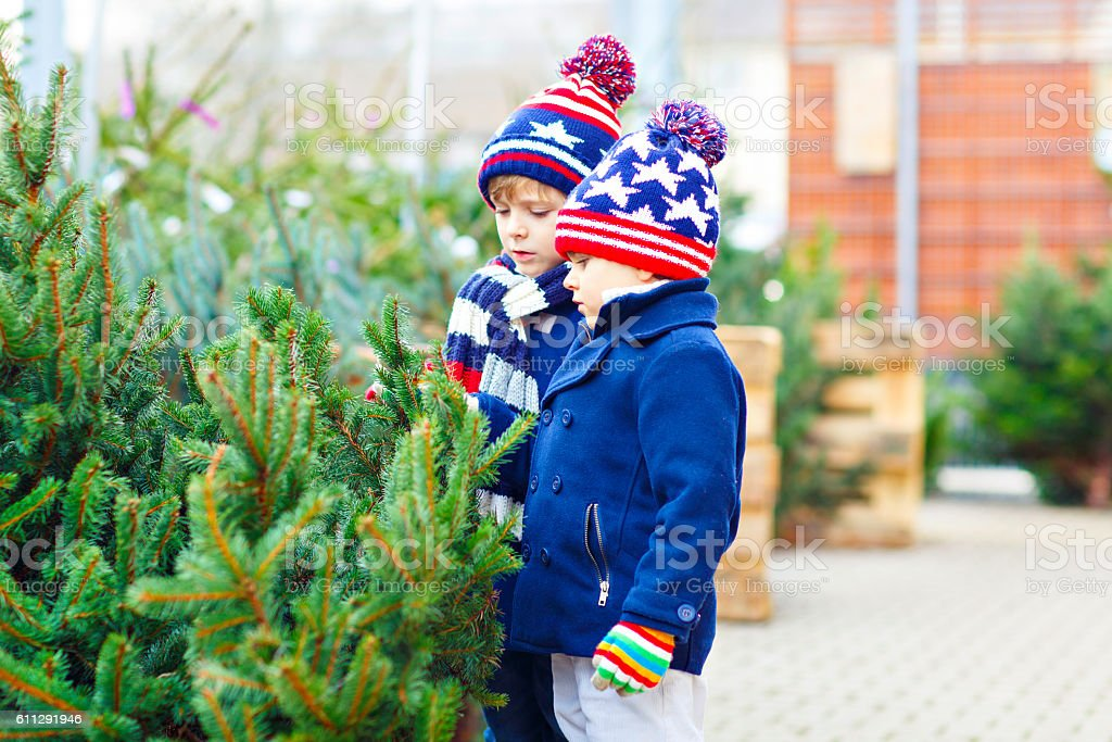 two little kid boys buying christmas tree in outdoor shop stock photo