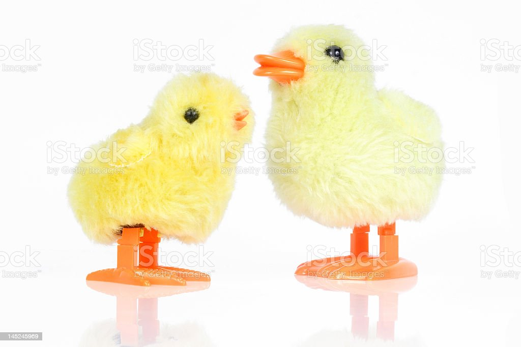 Two little yellow chicks royalty-free stock photo
