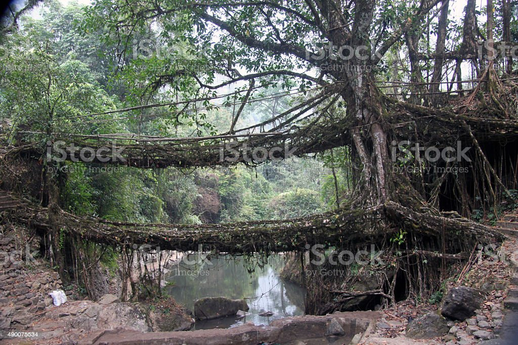 Two living root bridges in northeastern India stock photo
