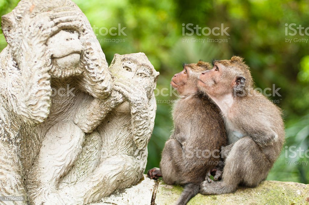 Two long-tailed macaques looking at a statue stock photo