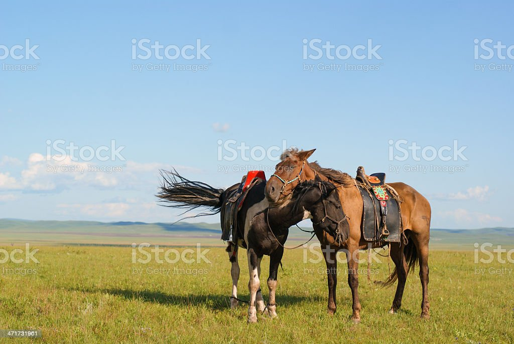 two loving horse stock photo