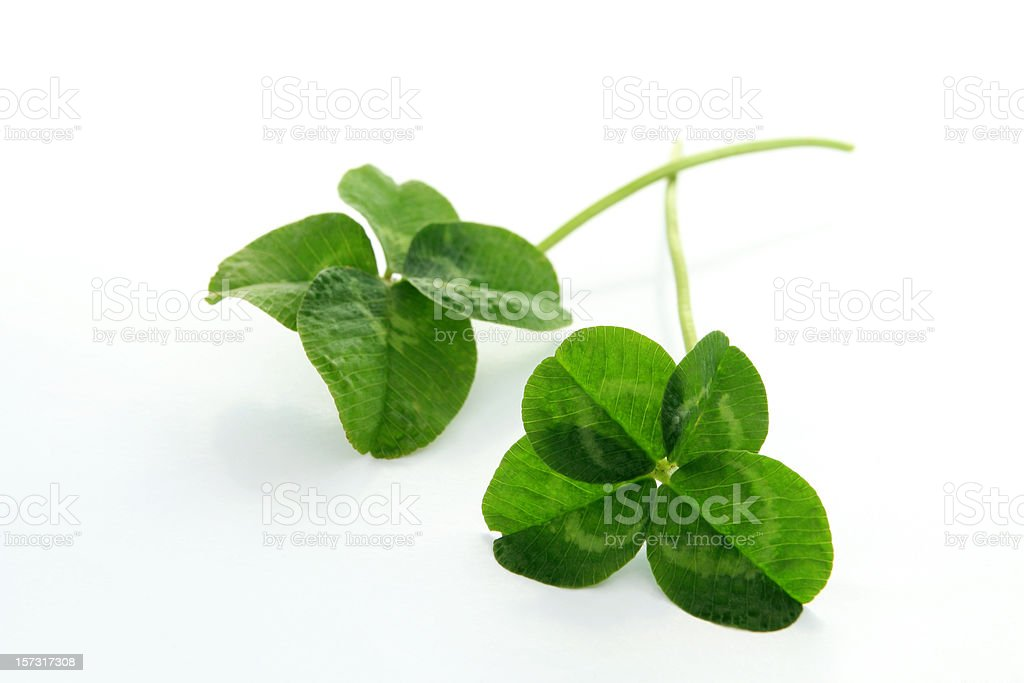 Two lucky clovers. royalty-free stock photo