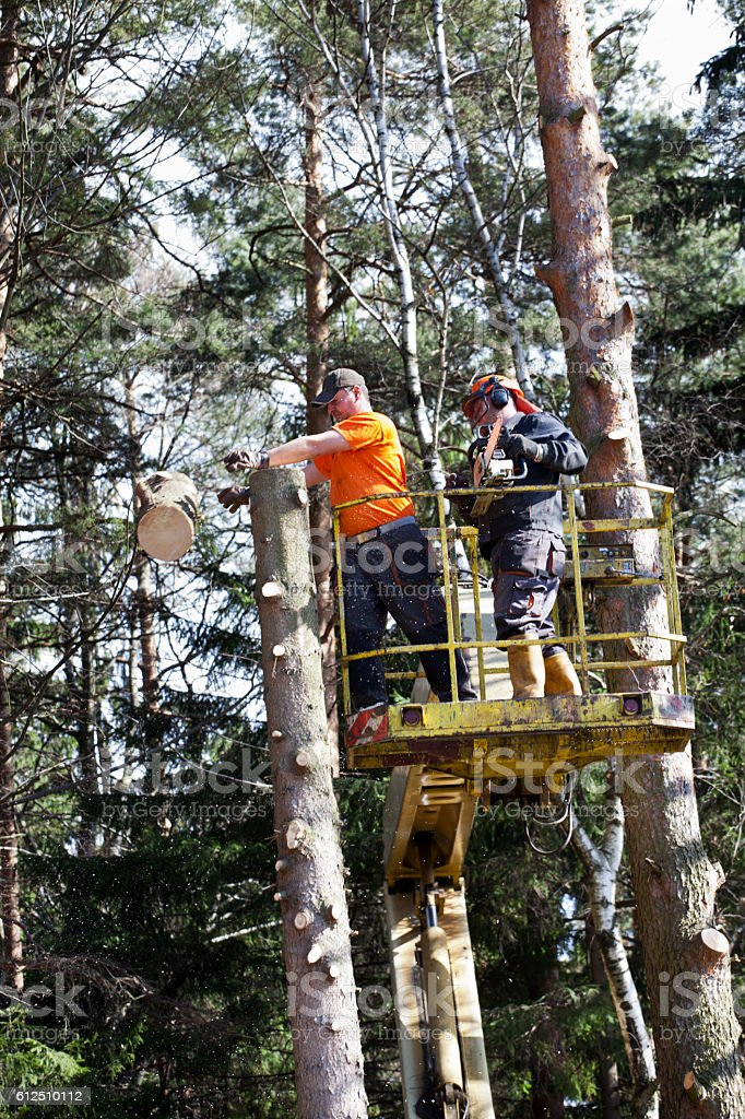 Two lumberjacks cut down a tree on the platform stock photo