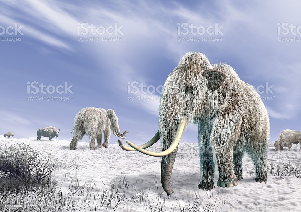 Two mammoth in a field covered with snow. stock photo