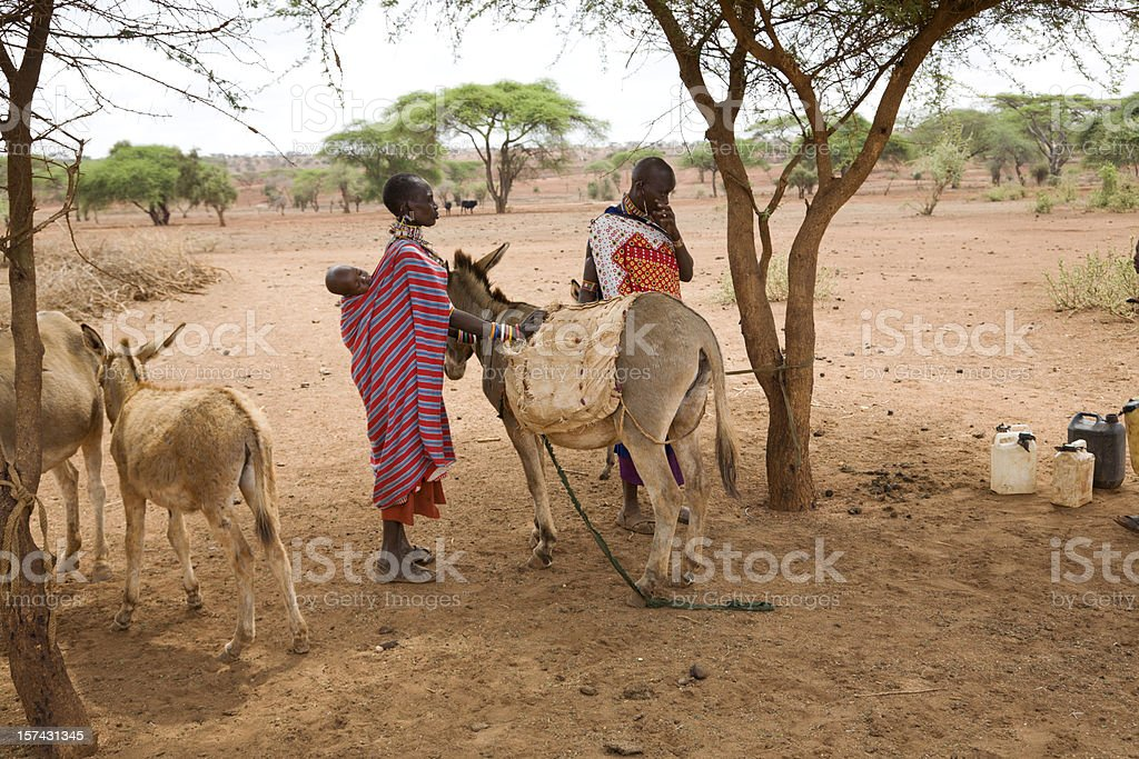 Two masai women loading donkey with water cans royalty-free stock photo