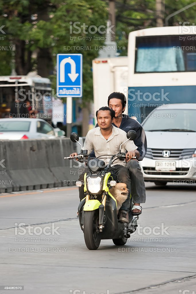Two men no helmet with dog driving motorbike stock photo