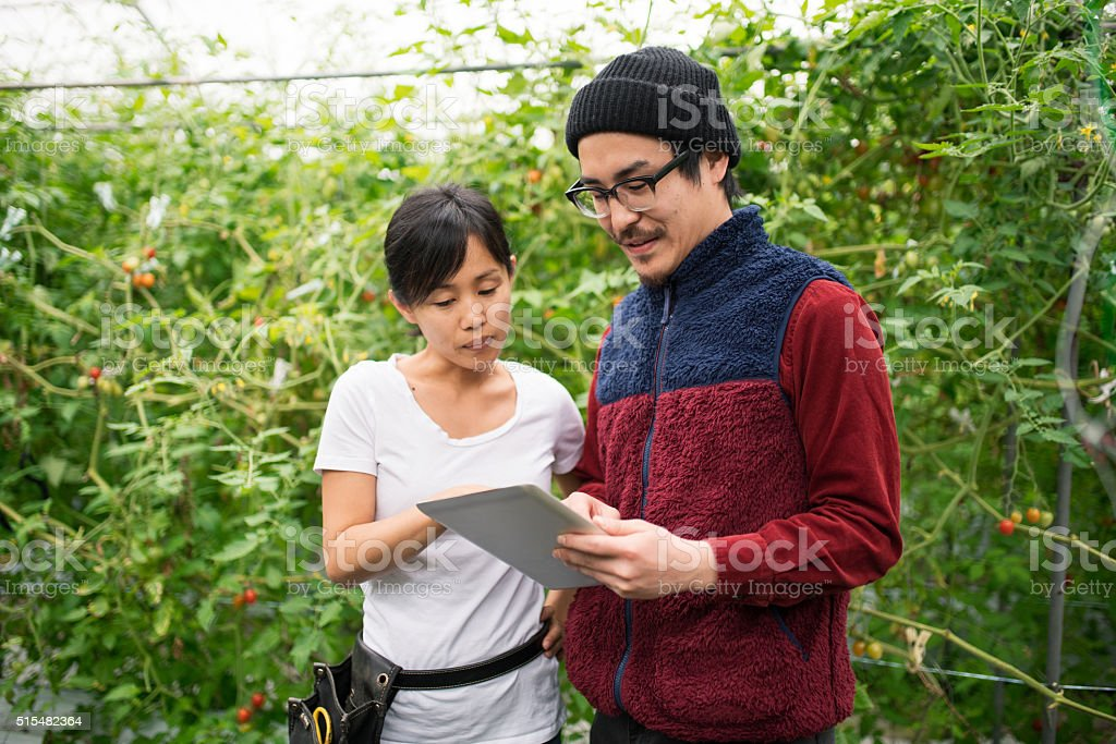 Two mid adult farmers using a digital tablet stock photo