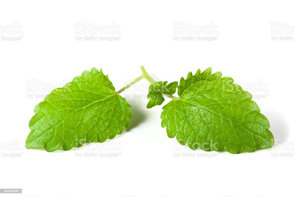 Two mint leaves on a white background royalty-free stock photo
