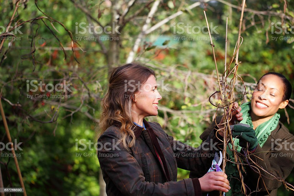 two mixed race females friends gardening stock photo