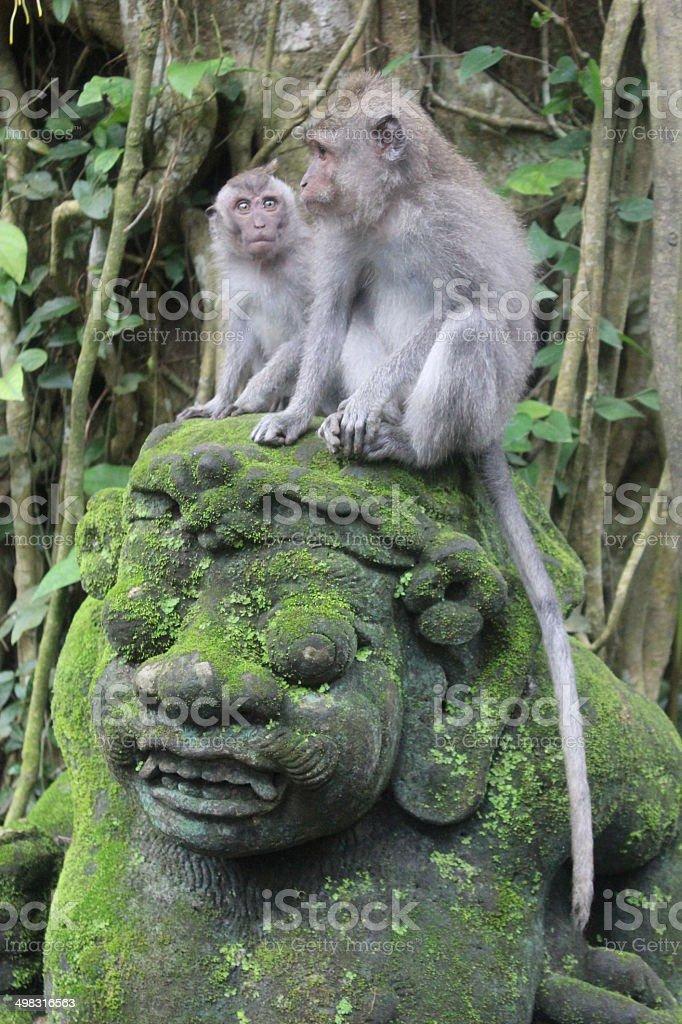 Dos monos sobre una estatua de balines foto de stock libre de derechos