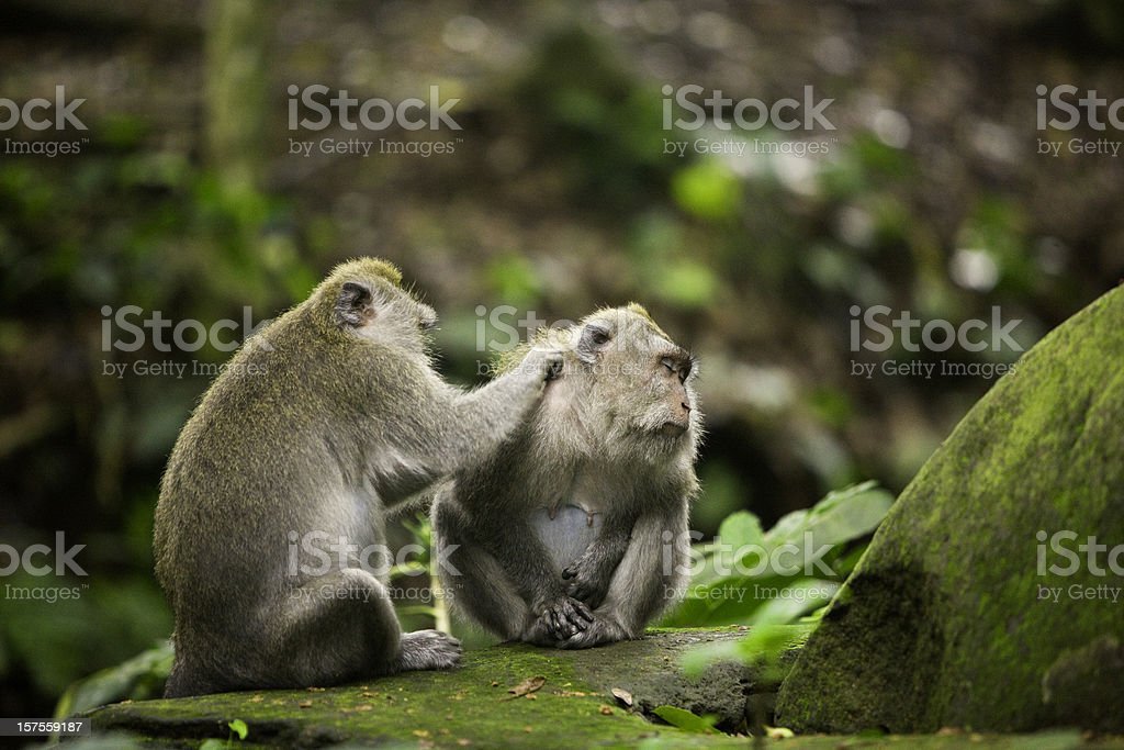 Two monkeys stock photo