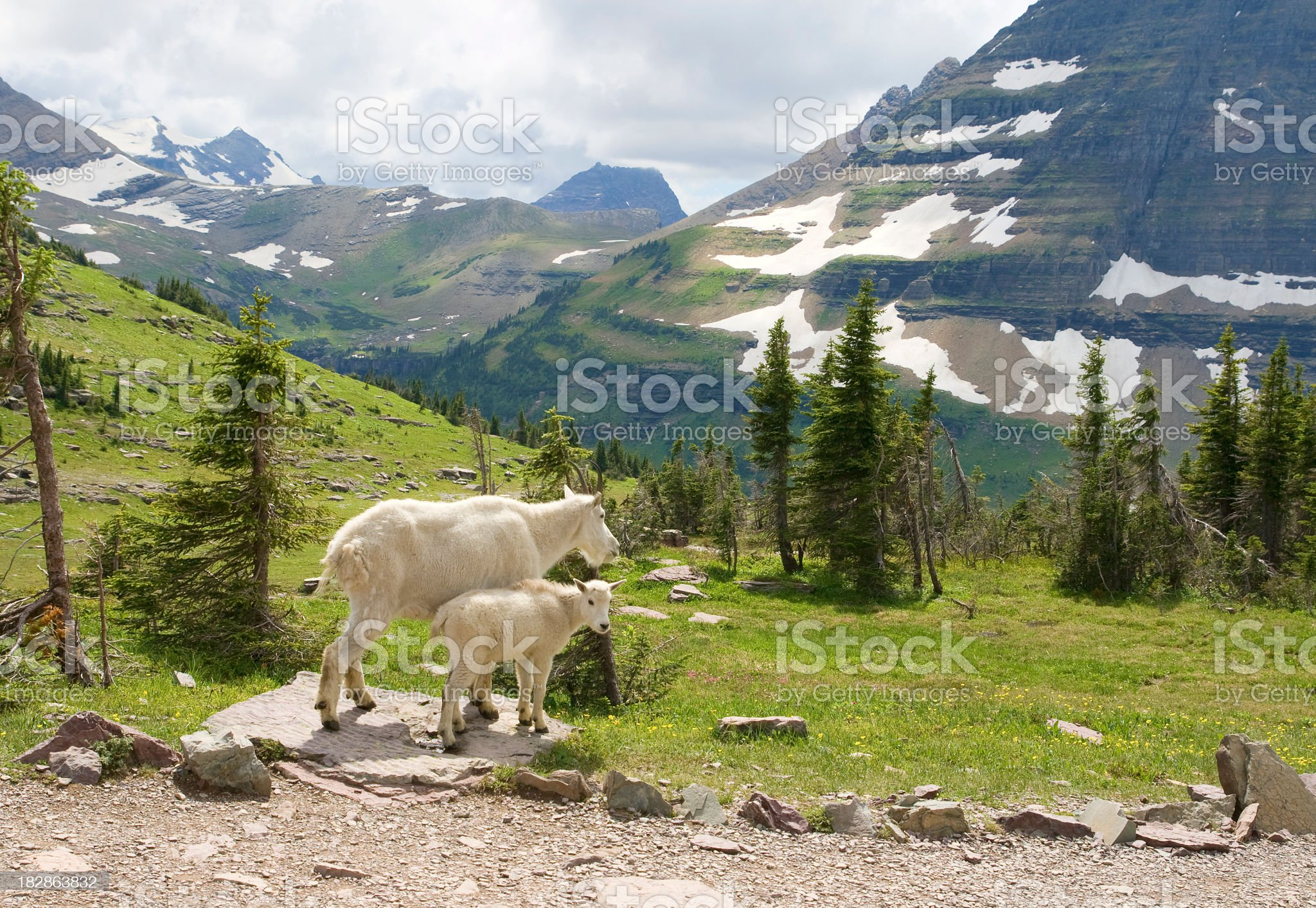 two montain goats royalty-free stock photo