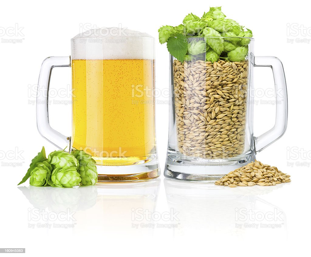 Two Mug: fresh beer and full of barley hops, isolated royalty-free stock photo