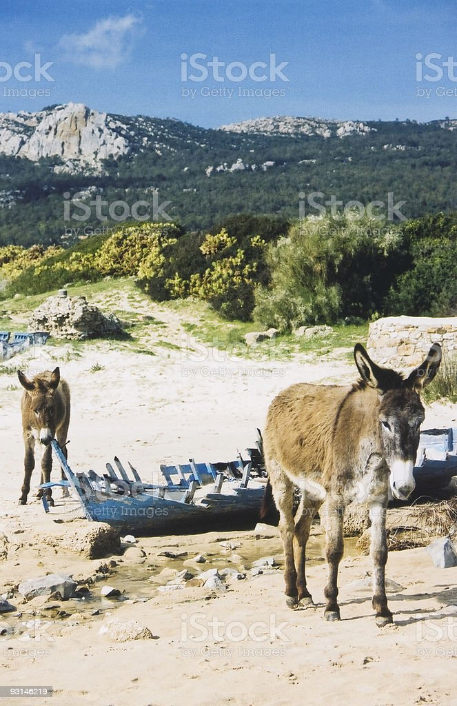 two mules royalty-free stock photo