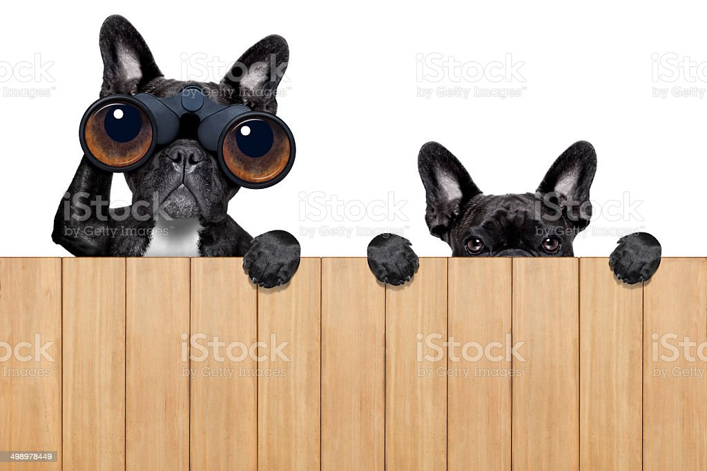 two nosy dogs stock photo