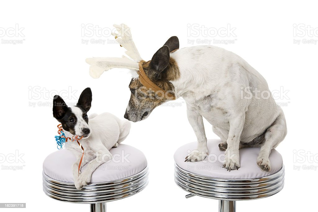 Two Odd Dogs royalty-free stock photo
