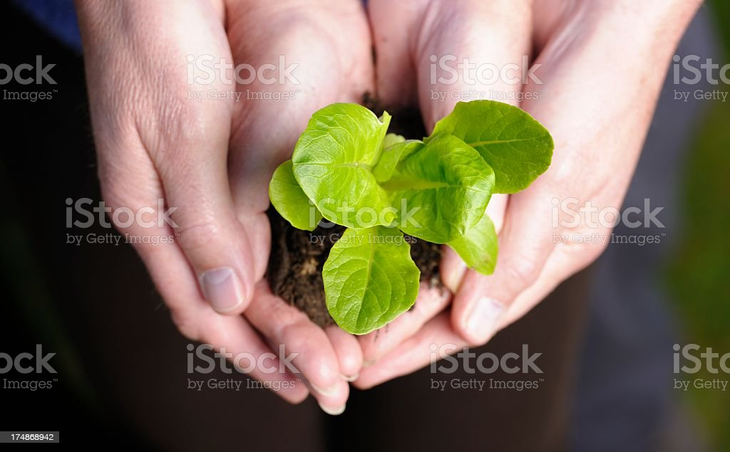 Two Pair Of Hands Holding A Plant royalty-free stock photo