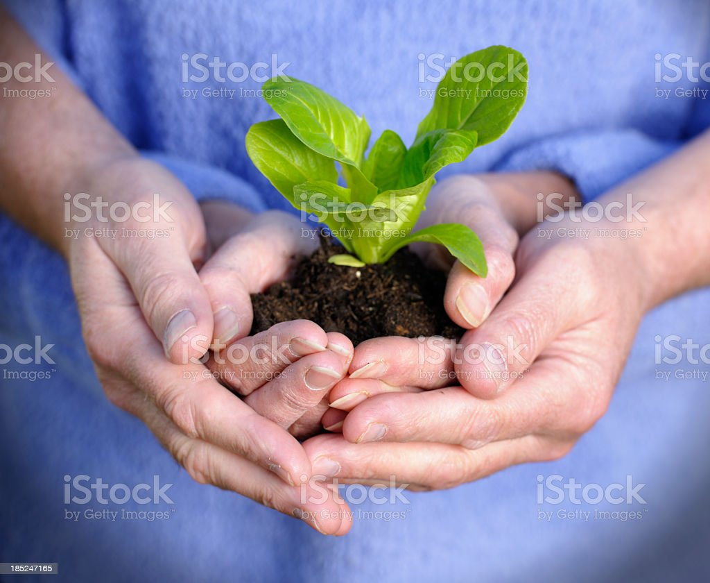 Two Pair Of Hands Holding A Plant stock photo