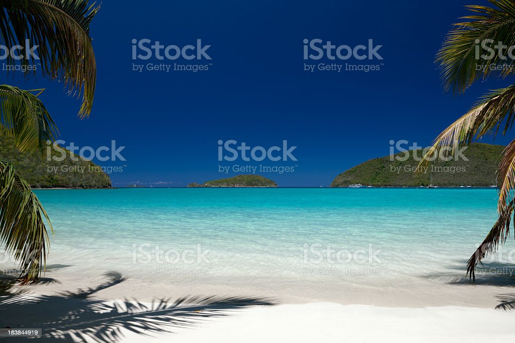 two palm trees at the Caribbean white sand beach stock photo
