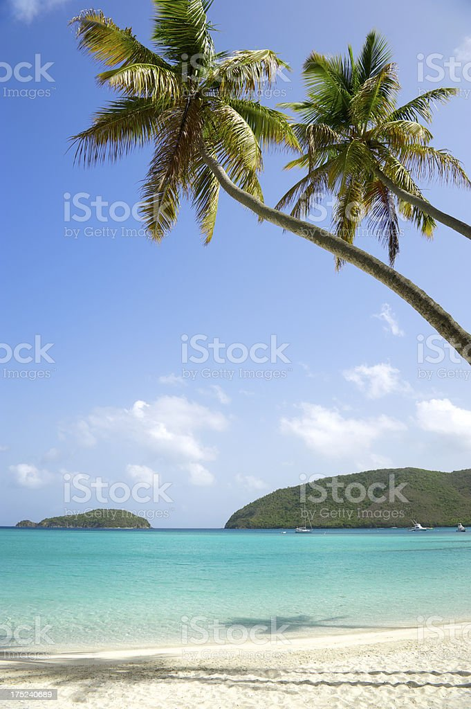 Two Palm Trees Curve Over Virgin Islands Caribbean Sea stock photo