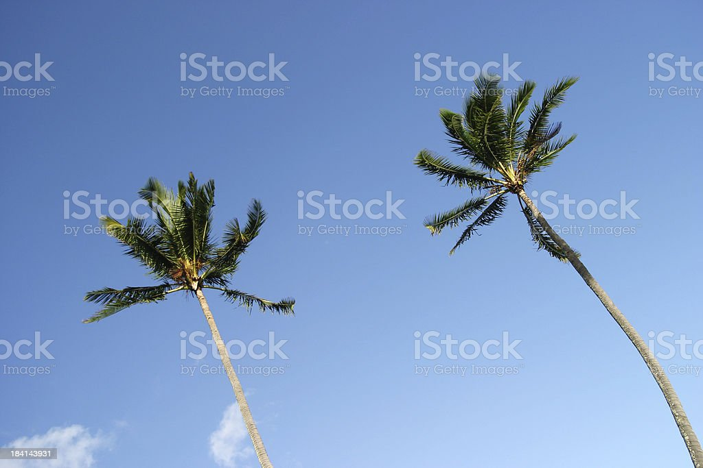Two Palms in the Sky royalty-free stock photo