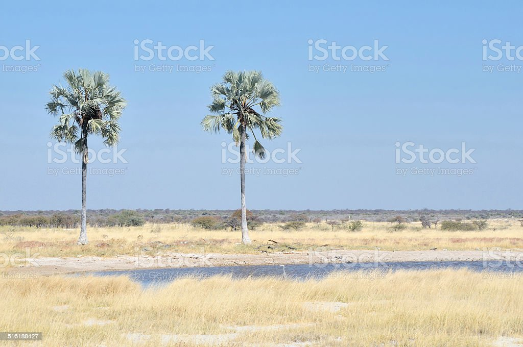 Two Palms waterhole in the Etosha National Park, stock photo