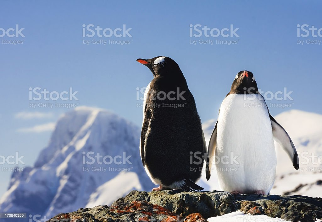 Two penguins dreaming royalty-free stock photo