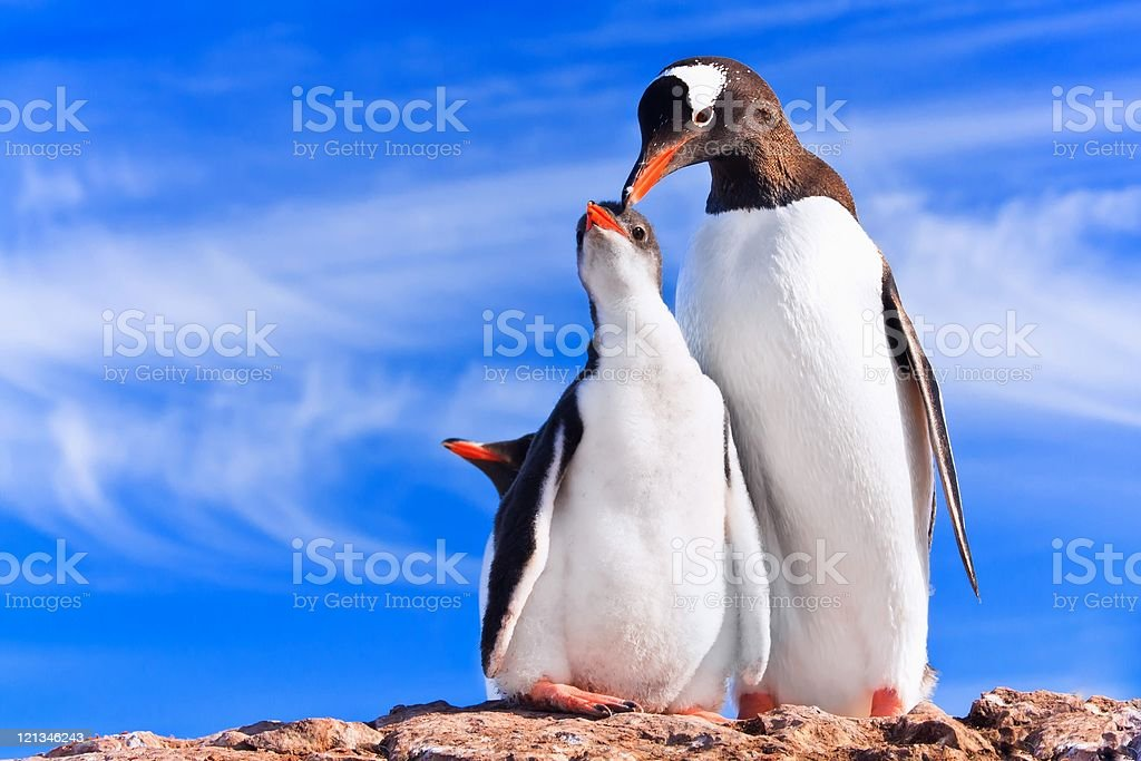 two penguins in Antarctica royalty-free stock photo