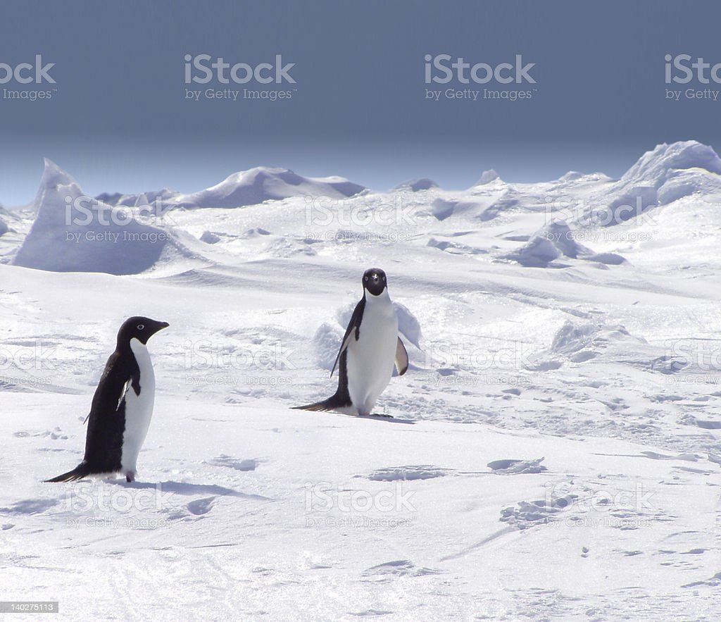 Two penguins on iceberg walking stock photo