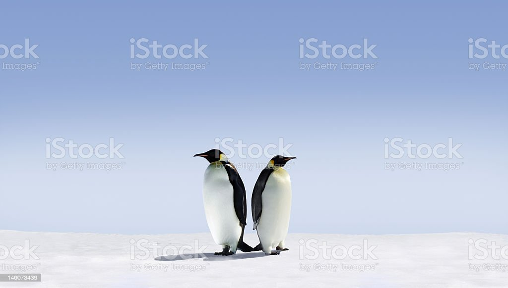 Two penguins standing back to back on a field of snow stock photo
