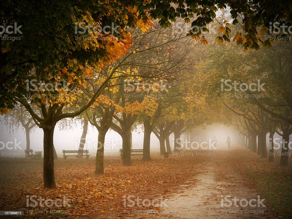 Two People Walking in a Park on Foggy Autumn Morning stock photo