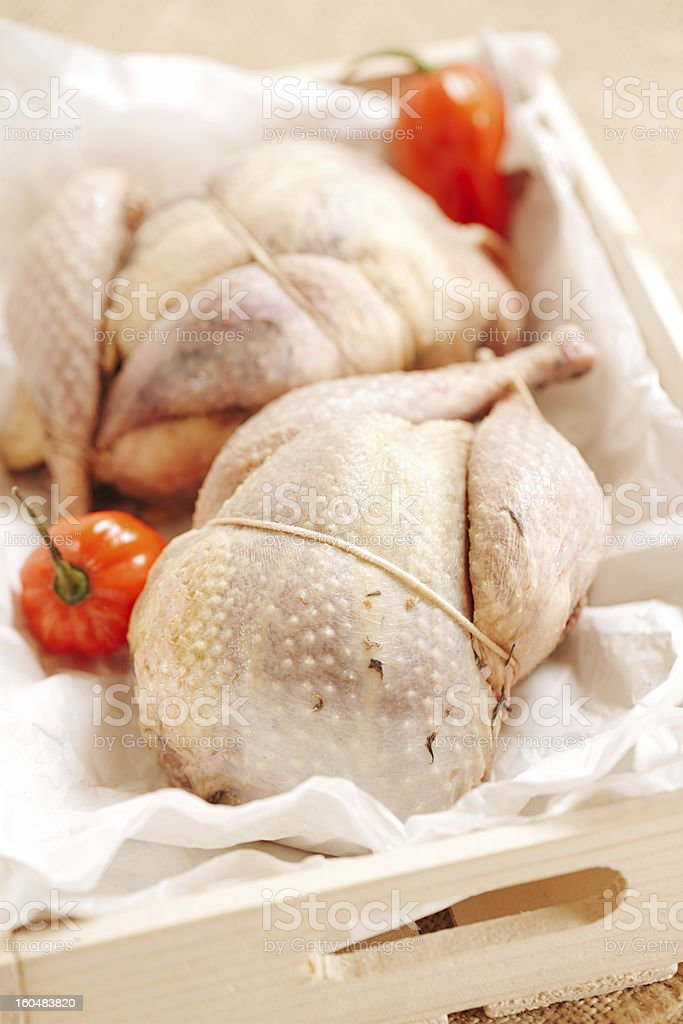 two pheasants bird, plucked and stuffed in wooden box stock photo