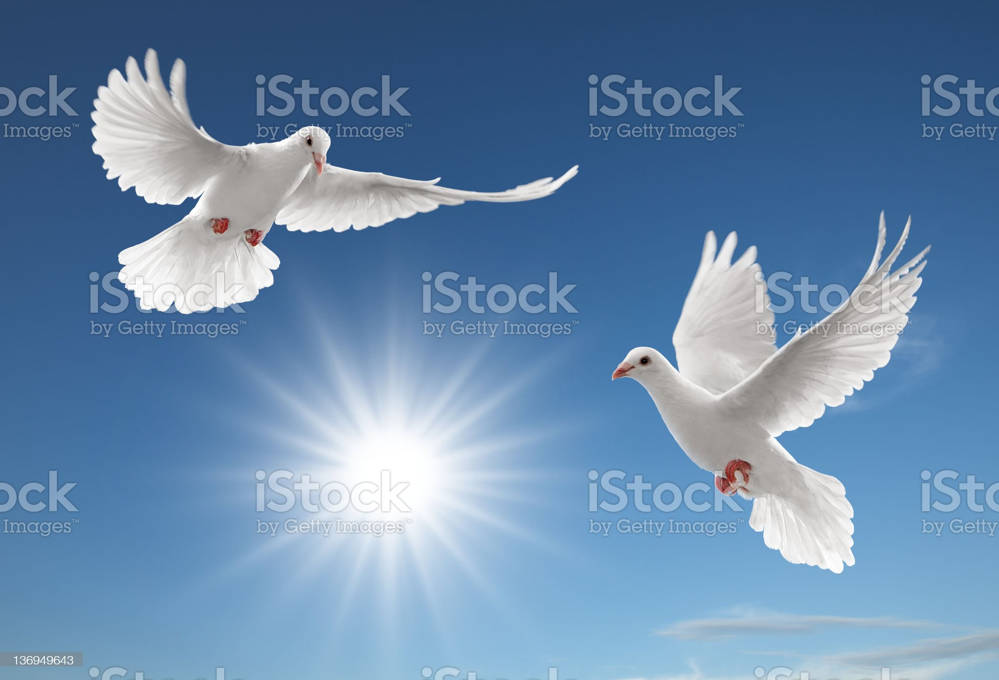 two pigeons royalty-free stock photo