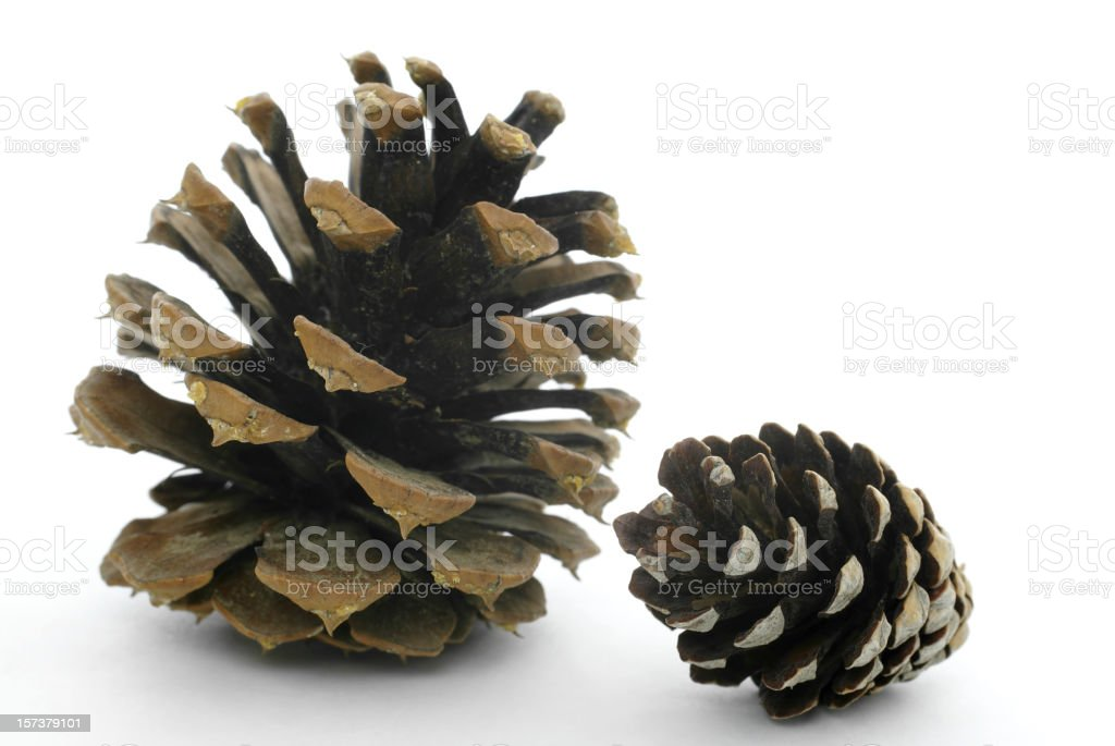 two pine cones royalty-free stock photo