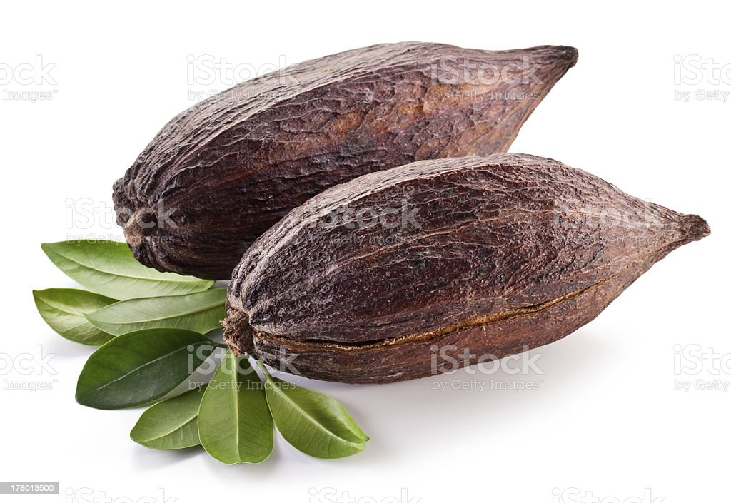 Two pods of cocoa isolated on white stock photo